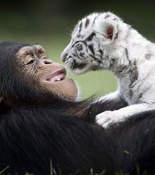 37bcb9 unusual animal friendship 15 1 x220
