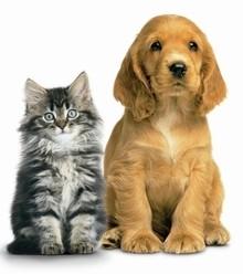 9003b6 dog or cat x220