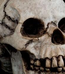 87559e germany skulls african x220