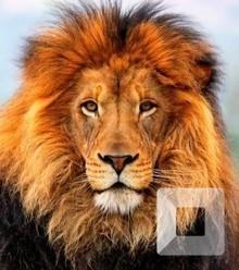 A8b358 lion x220