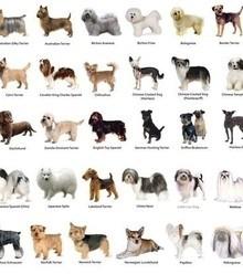 872c34 dog breeds x220