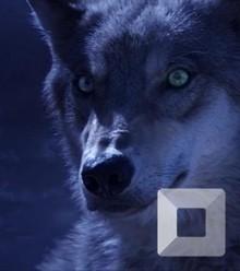 366869 wolf totem 3 x220