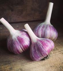 910cb3 garlic 3 x220