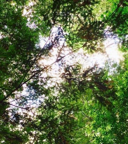 Cb7a00 trees x220
