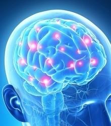 B3e81b brain 101 x220