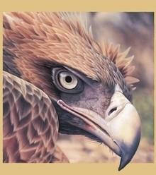 020ce7 eagle eye x220