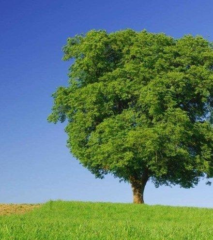 B59a38 tree x220