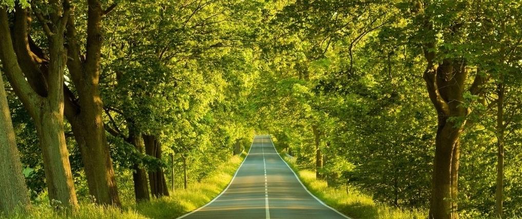 4059fa nature scene autumn h678