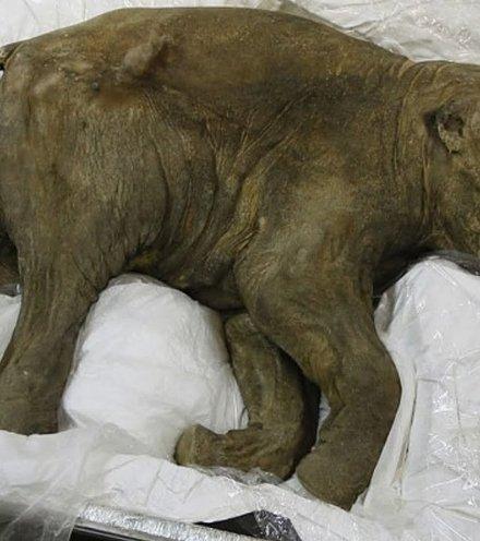 5cd9a3 mammoth baby x220