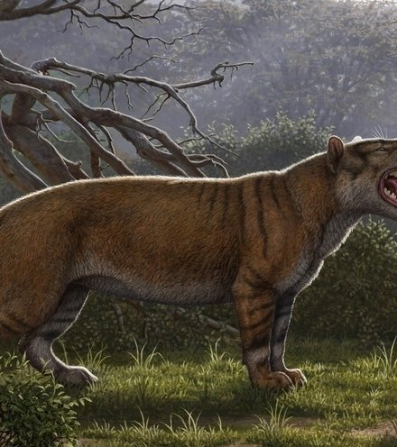 578b52 lion like creature x220