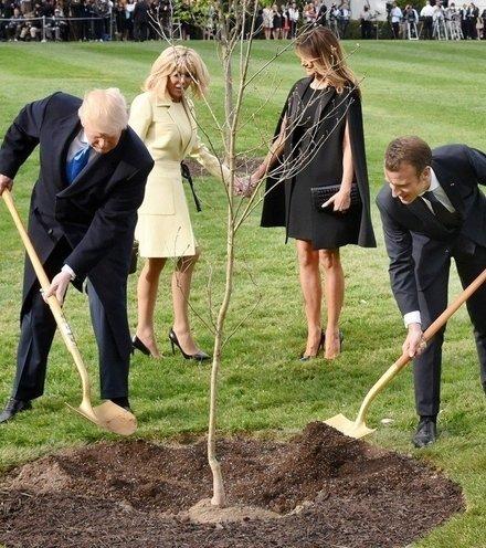 2b2a3d trump macron tree plant x220