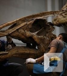 Cb0bdd saurolophus skull replica x220