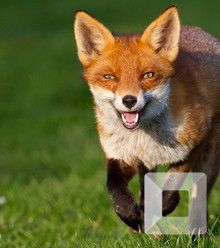 8ea339 fox 05 x220