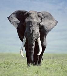 54317f elephant x220