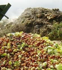 3bb90e pilot scheme shows promise in repurposing commercial food wastes x220