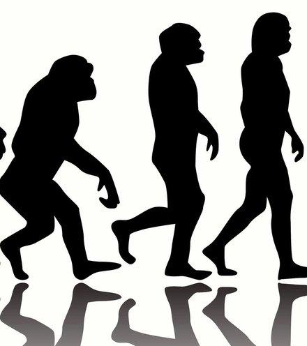 Da1f8f human evolution 2 x220