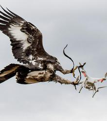 854e0c eagle drones x220