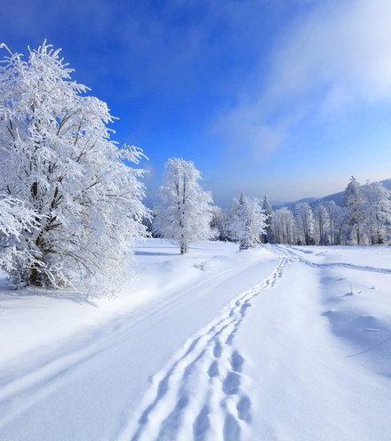 86a2b9 winter scene x220