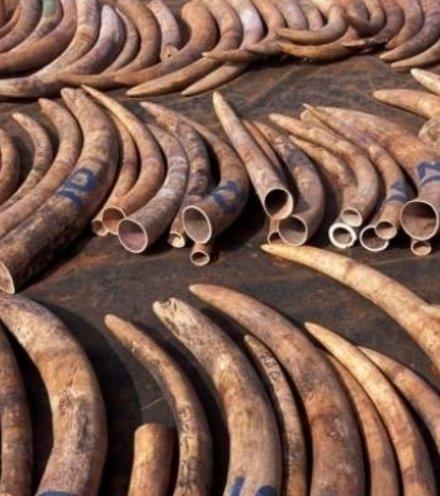 575d31 ivory cambodia x220