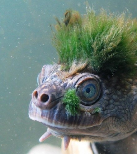 B07ea0 punk turtle x220