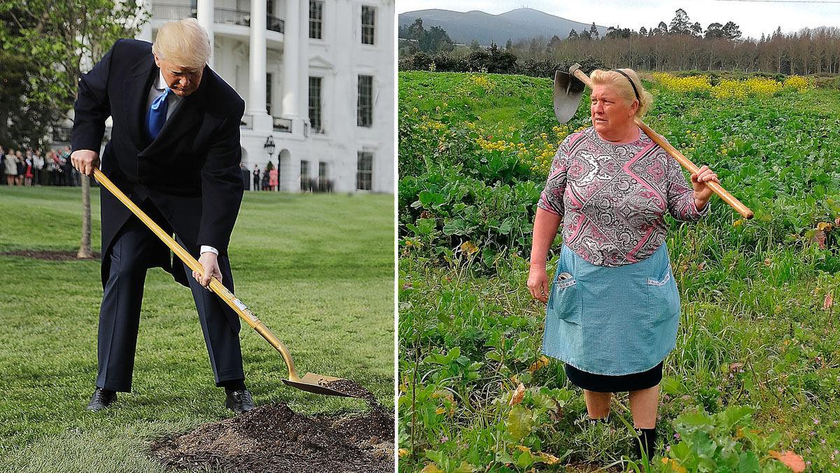 """Дональд Трампын """"эгч""""-ийг Испаний фермээс олжээ"""