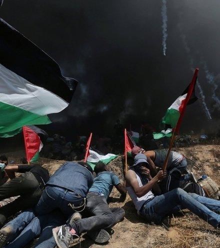 8b36f6 palestinians resist x220