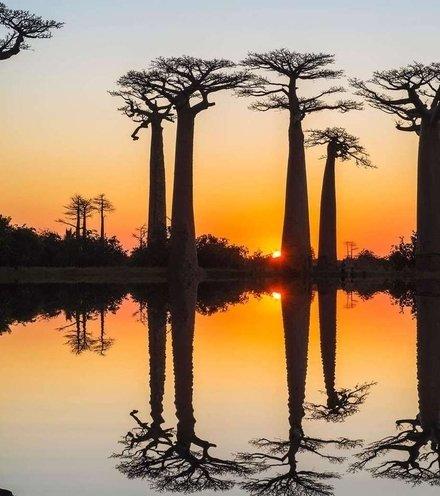E7be2d baobab x220