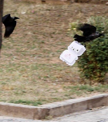 C3e19e crows x220