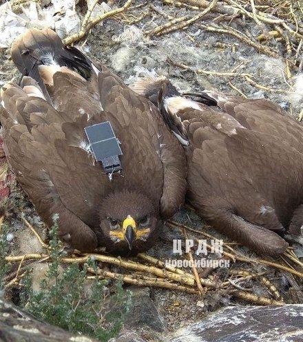 1648b1 eagles tracking x220