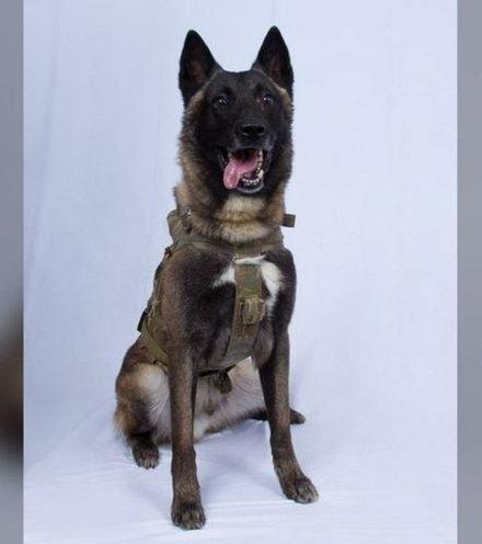 5fc496 isis leader capture dog x220