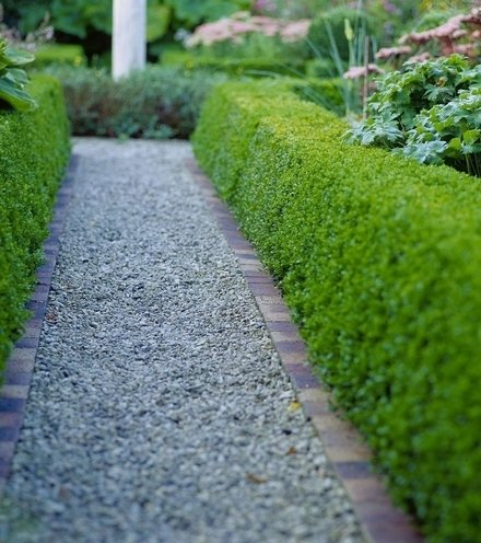 298e00 buxus  buxus sempervirens  hedge bordering gravel path 135587970 5a69134b3de423001a6c82b9 x220