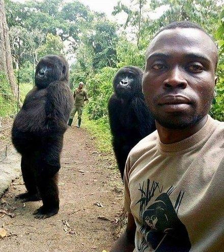 276e64 gorilla selfie x220