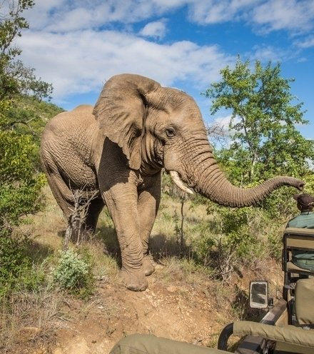 C3ed0d elephant at south african park x220
