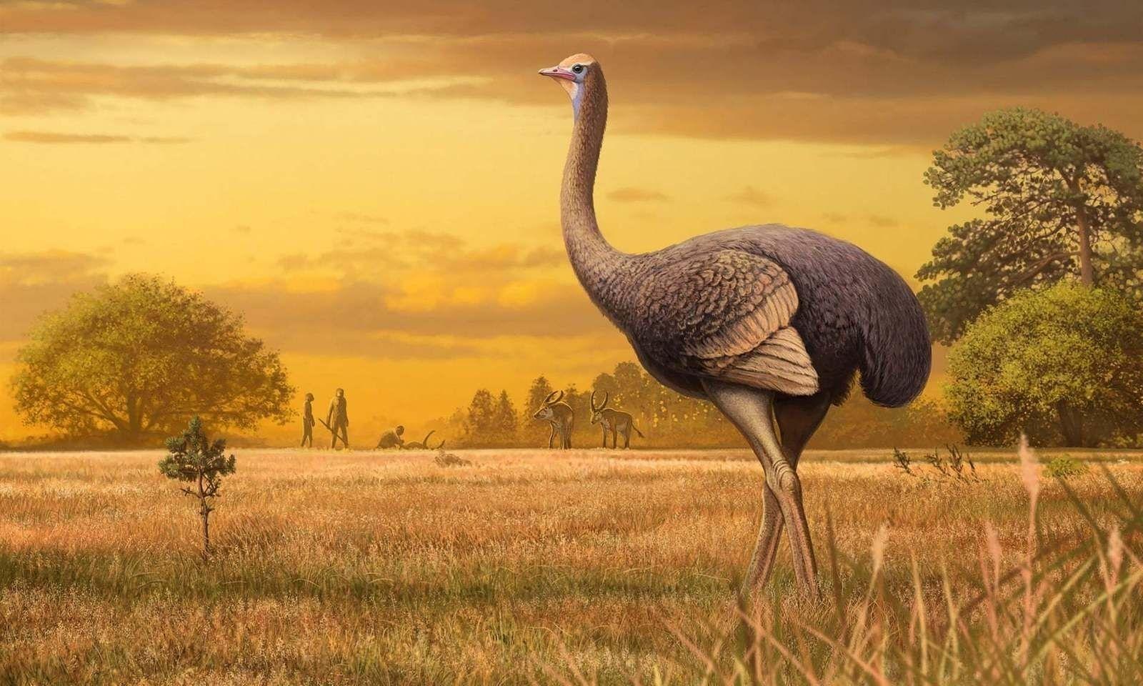 Европ тивд хагас тонн жинтэй шувуу хүмүүстэй зэрэгцэн амьдарч байсныг эрдэмтэд баталжээ