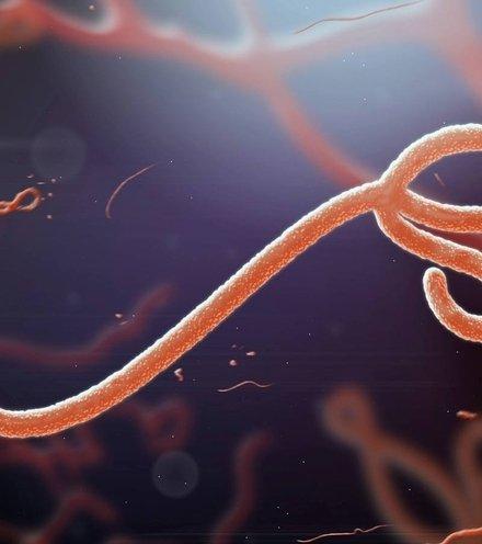 807fb1 ebola virus x220