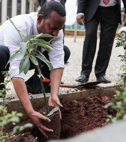 0f25d4 ethiopian planting day x220