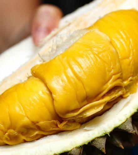 T8f0f9 durian malaysian x220