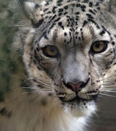 64eleq snow leopard x220