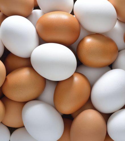 Gyq2zh eggs 1 x220