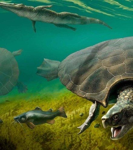 0338e8 giant turtle x220