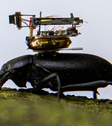 51m9k0 beetle mounted camera x220