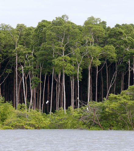 Elbv2x amazon forest x220