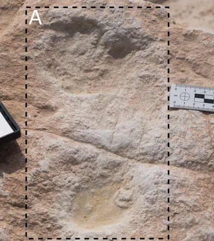 Qtgs73 arabia homo sapiens footprint x220