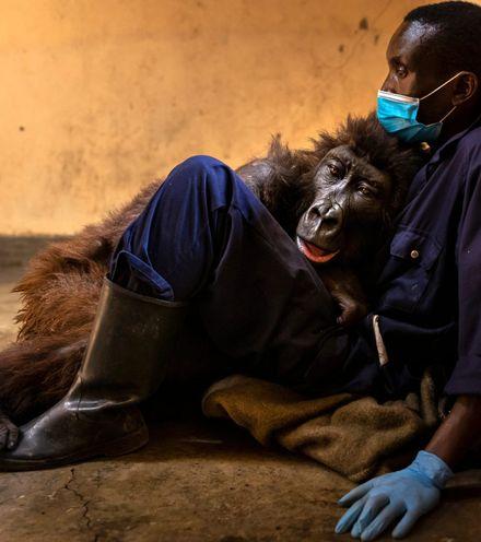 Xu1pak ndasaki gorilla x220