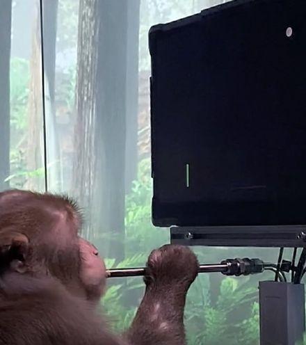 Ypdnr0 monkey pong play x220