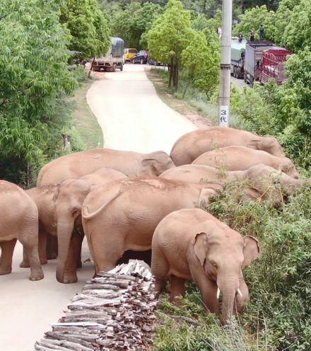 Kh3n66 yunnan elephant voyage x220